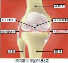 膝関節って何?
